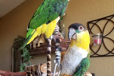 Protect Your Birds From Pet Suffocation!