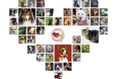 Honoring National Pet Memorial Day!